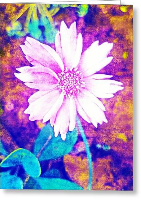 Pink Bloom Greeting Card by Rachel Hannah