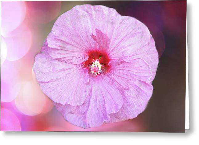 Pink Blossom Greeting Card by Art Spectrum