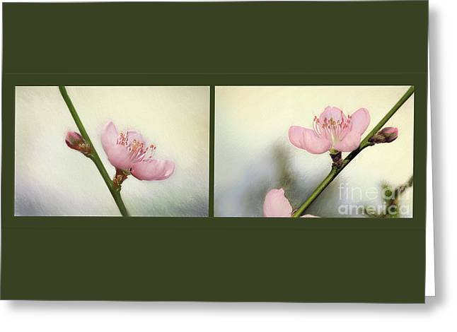 Greeting Card featuring the photograph Pink Blossom Collage By Kaye Menner by Kaye Menner