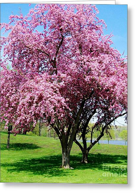 Pink Blossom Tree Greeting Card by Marsha Heiken