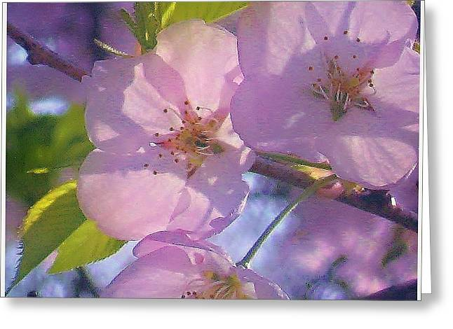 Mikki Cucuzzo Greeting Cards - Pink Blossoms 2 Greeting Card by Mikki Cucuzzo