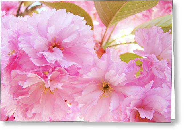Pink Blossoms Art Prints Canvas Spring Tree Blossoms Baslee Troutman Greeting Card by Baslee Troutman