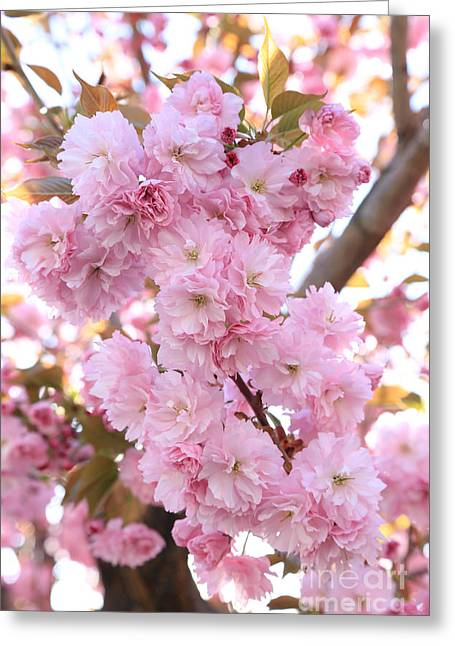 Pink Blossoms Beauty Greeting Card