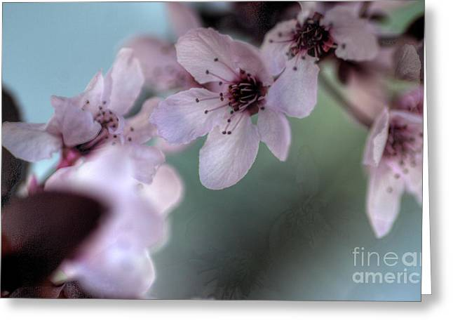 Greeting Card featuring the photograph Pink Blossoms by Jim and Emily Bush