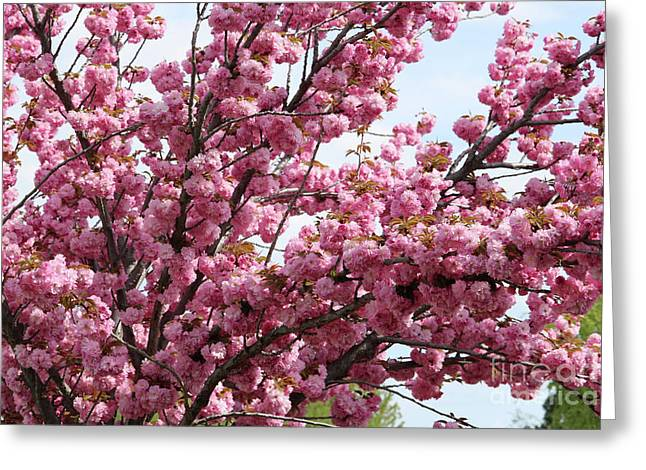 Pink Blossoms Galore Greeting Card