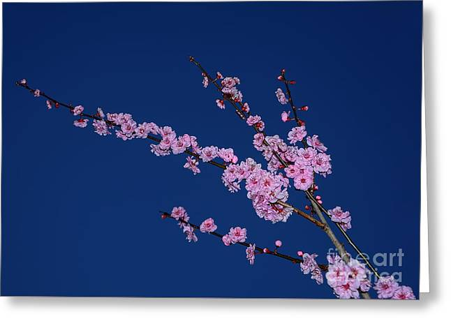 Pink Blossoms On Blue Sky By Kaye Menner Greeting Card by Kaye Menner