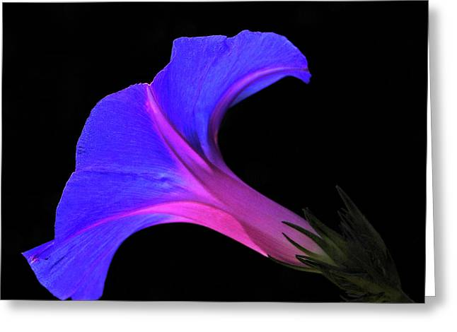 Pink Blue Flower Greeting Card by Chaza Abou El Khair