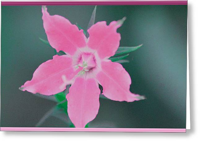 Pink Borders Greeting Card by Jimi Bush