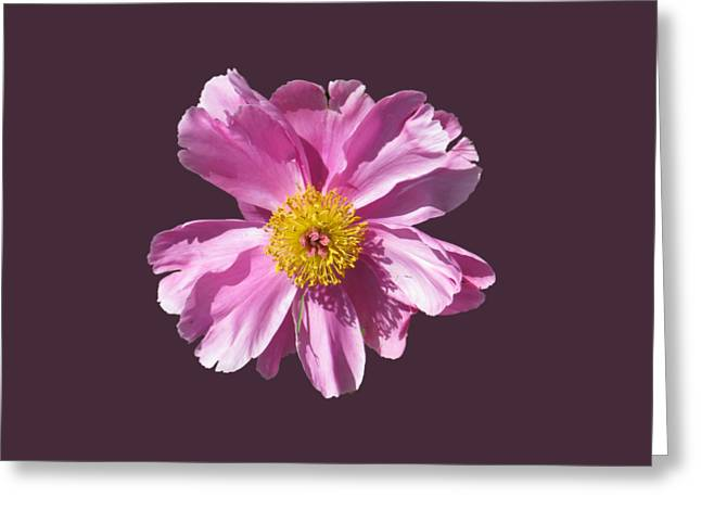 Pink Burst Greeting Card