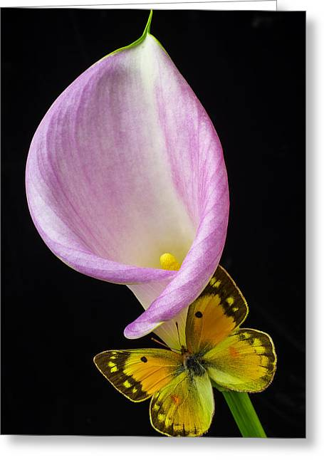 Pink Calla Lily With Yellow Butterfly Greeting Card