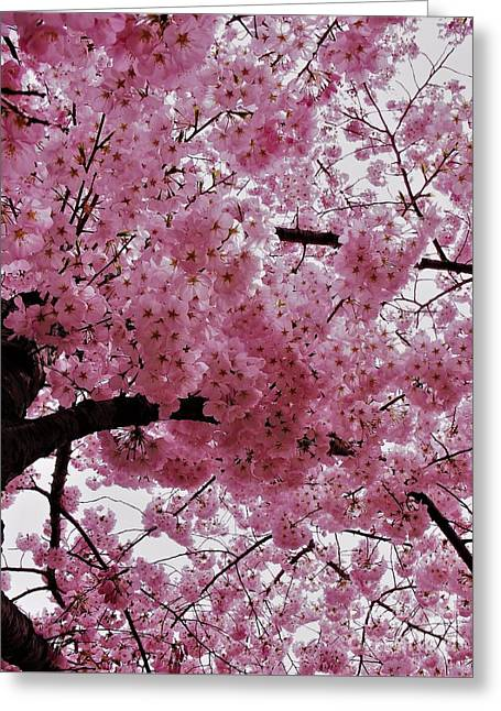 Pink Canopy Greeting Card