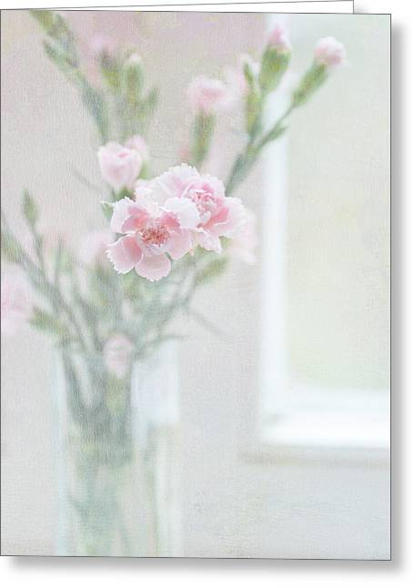 Pink Carnation At The Window Greeting Card