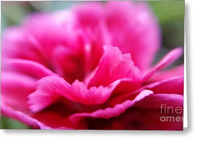 Pink Carnation Greeting Card by Lainie Wrightson