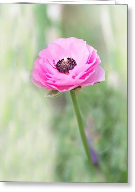 Pink Center Greeting Card