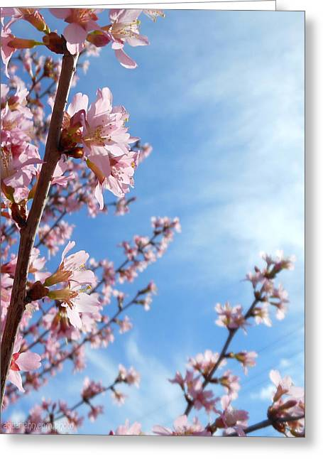 Pink Cherry Blossoms Branching Up To The Sky Greeting Card
