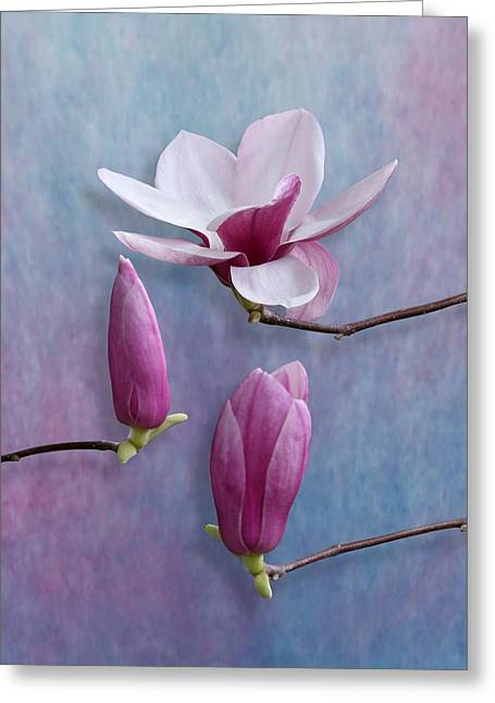 Pink Chinese Magnolia Flower With Two Buds Greeting Card