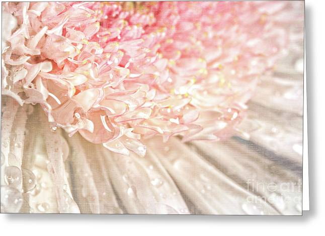 Pink Chrysanthemum With Antique Distress Greeting Card by Sandra Cunningham