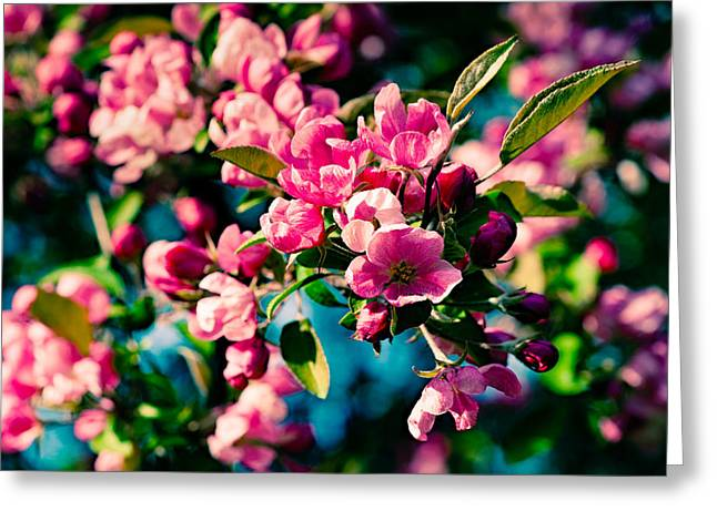 Greeting Card featuring the photograph Pink Crab Apple Flowers by Alexander Senin