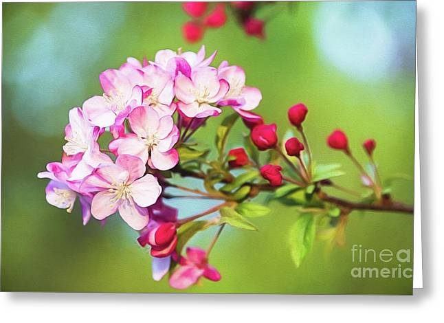 Pink Crabapple Blossoms Greeting Card