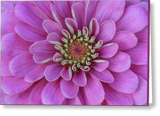 Pink Dahlia Greeting Card by Dale Kincaid