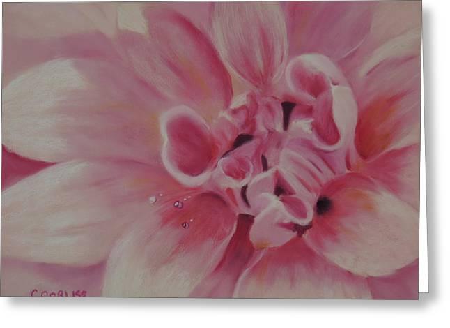 Pink Dahlia II Greeting Card