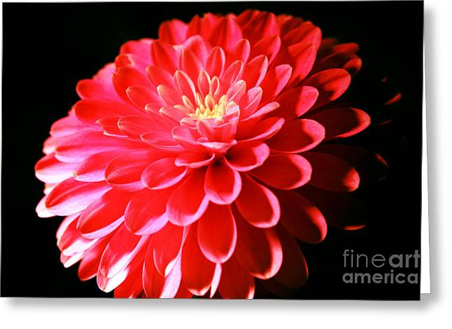 Pink Dahlia1 Greeting Card