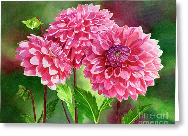 Pink Dahlias With Background Greeting Card by Sharon Freeman