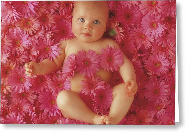 Pink Daisies Greeting Card