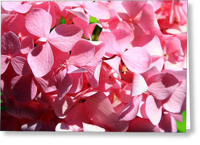 Pink Greeting Card by Dana  Oliver