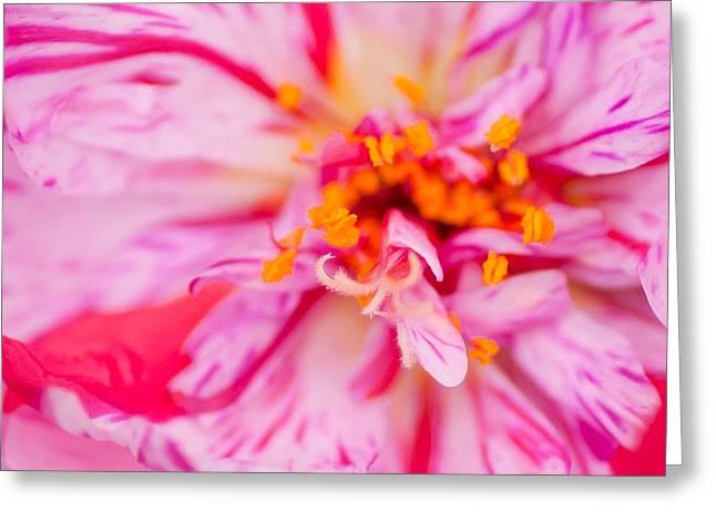Pink Greeting Card by David Waldrop