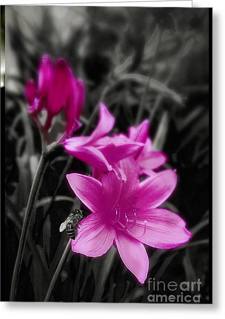 Pink Day Lily Greeting Card by Mindy Sommers