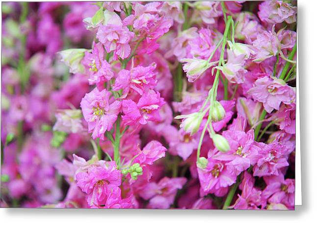 Pink Delphinium. Amsterdam Flower Market Greeting Card by Jenny Rainbow