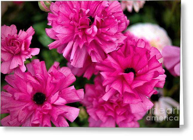 Greeting Card featuring the photograph Pink by Diana Mary Sharpton