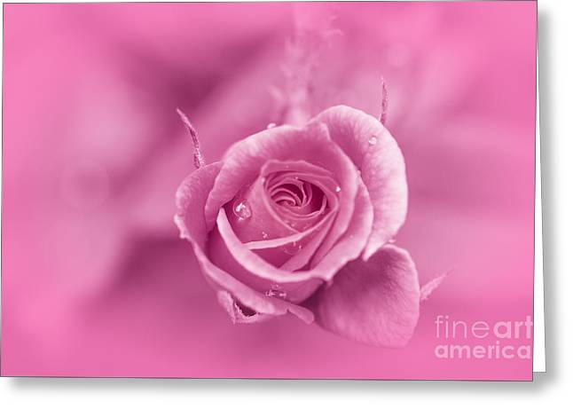 Pink Dream Greeting Card