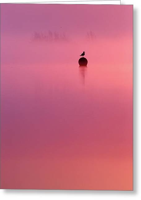Pink Dream - Gull Silhouet At Sunrise Greeting Card