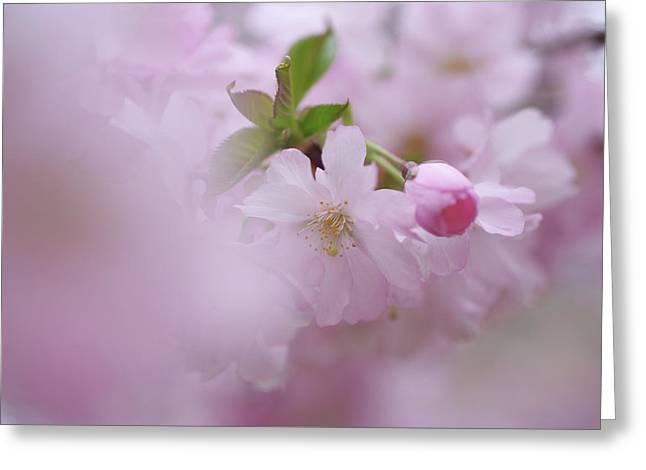 Pink Dream. Spring Pastels Greeting Card by Jenny Rainbow