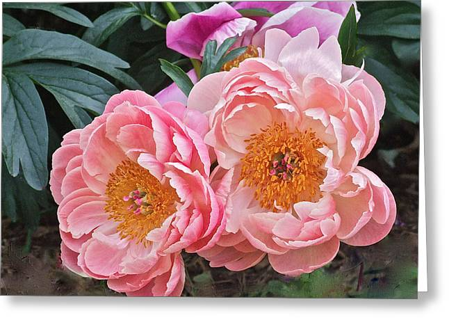 Pink Duo Peony Greeting Card by Janis Nussbaum Senungetuk