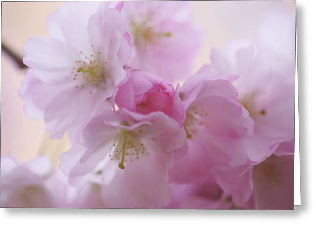 Pink Family. Spring Pastels Greeting Card by Jenny Rainbow