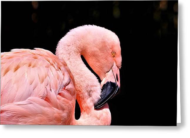 Pink Flamingo On Black Greeting Card
