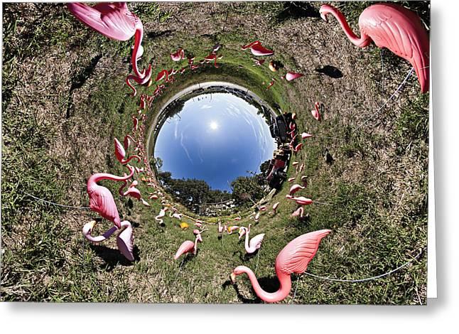 Pink Flamingo Rabbit Hole Greeting Card