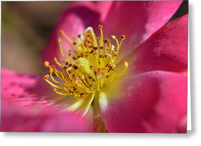 Pink Floral Macro Greeting Card by Aimee L Maher Photography and Art Visit ALMGallerydotcom