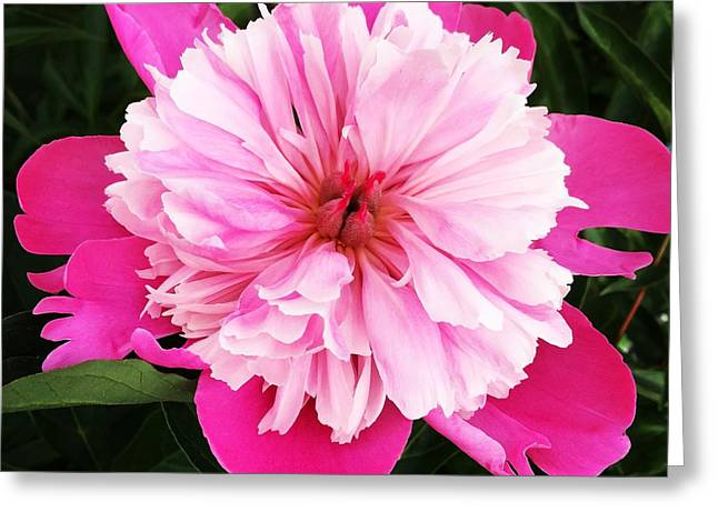 Pink Flower Greeting Card by Carl Griffasi