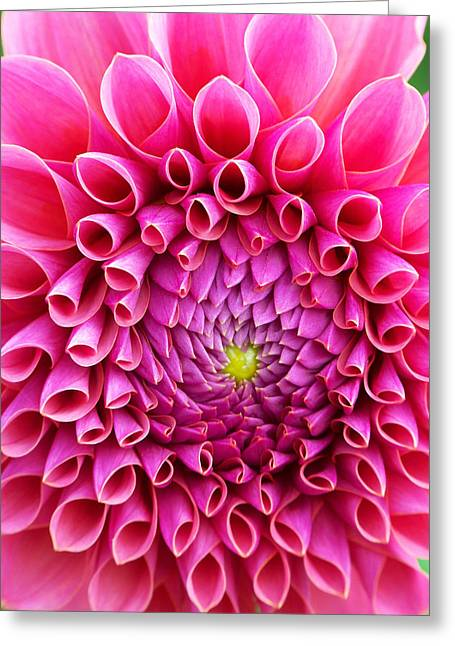 Pink Flower Close Up Greeting Card