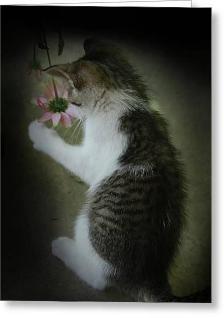 Pink Flower Greeting Card by Kim Henderson