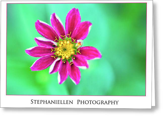 Pink Flower Greeting Card by Stephanie Hayes