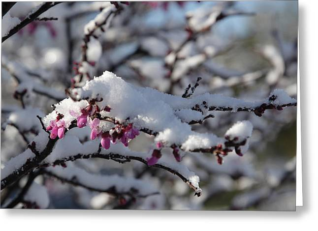 Pink Flower With Snow Greeting Card