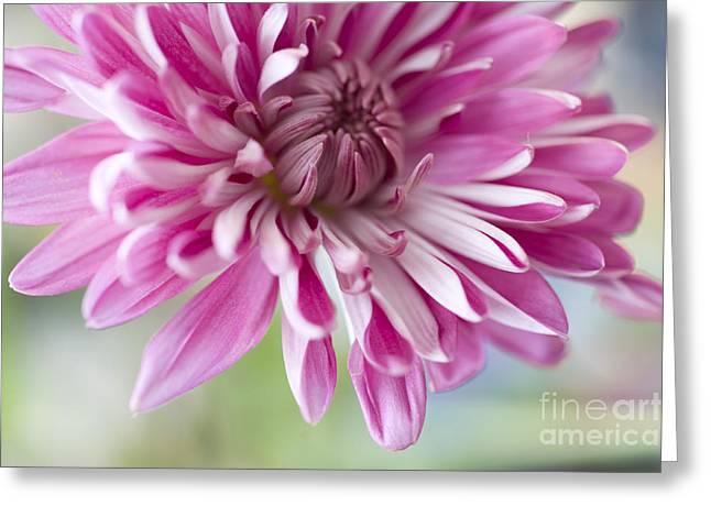 Pink Flower1 Greeting Card by Dewey Register