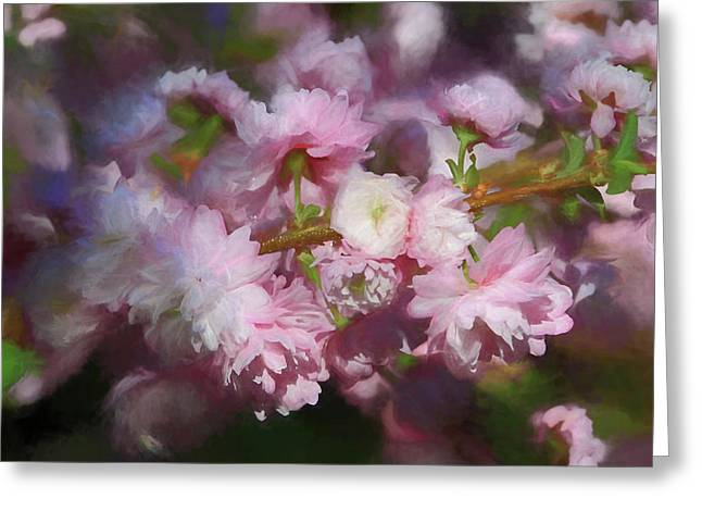 Greeting Card featuring the photograph Pink Flowering Almond by Donna Kennedy