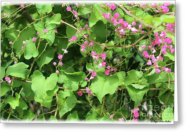 Greeting Card featuring the photograph Pink Flowering Vine1 by Megan Dirsa-DuBois