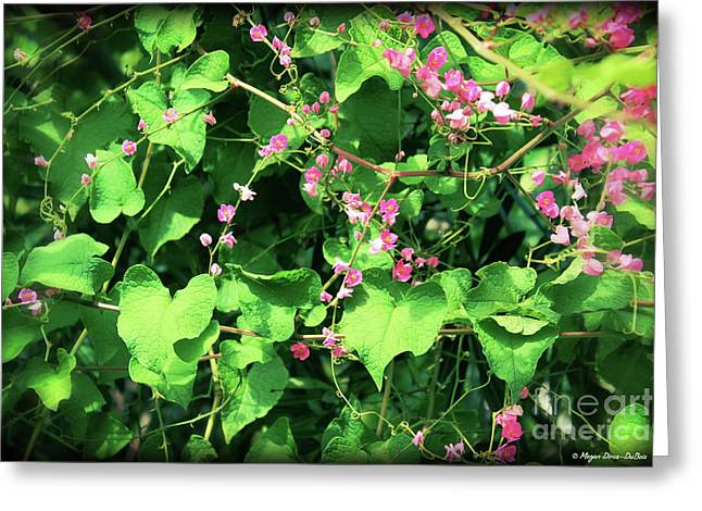 Greeting Card featuring the photograph Pink Flowering Vine2 by Megan Dirsa-DuBois